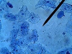 Cell lesson plans--includes virtual microscope link