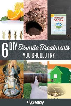 Are you trying to prevent a termite infestation? Is your biggest worry the effects that chemical laden pesticides might have on your home and yard? Here are a few natural home remedies for termite control that work wonderfully as prev Types Of Termites, Drywood Termites, Termite Control, Pest Control, Bug Control, Diy Termite Treatment, Termite Inspection, Pool Liners, Gardens