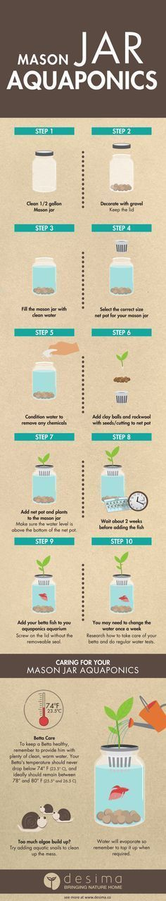 Check out  Mason Jar Aquaponics