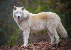 À wolfpark Werner Freund