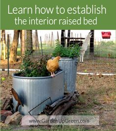 Preparing a raised bed is what I call fun; it gives me the opportunity to watch natural materials work together and for whatever reason I find that energizing. I've been asked many times how to…