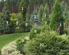 декоративные растения,ландшафтный дизайн,хвойные,деревья,кустарники,саженцы,плодовые,декоративные растения,декоративные растения
