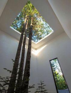 Note pour pour plus tard : penser à planter un arbre au milieu du salon !