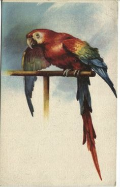 Based in Denmark, supplying the world with collectable books and postcards Vintage Birds, Parrot, French, Illustrators, Postcards, Artist, Painting, Animals, Animales
