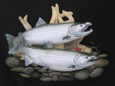 Salmon fish mounts salmon fish replicas hand painted by Luke Filmer Blackwater — The best salmon fish mounts salmon fish replicas steelhead fish mounts replicas rainbow trout fish mounts by luke filmer Chum Salmon, Fish Mounts, King Salmon, Sockeye Salmon, Science Crafts, Salmon Fishing, Rainbow Trout, Fish Art, Stage Design