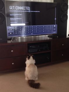 Rag doll Jazz helping to set up the TV