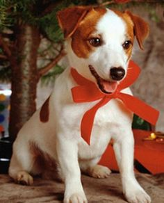 Cosa devi sapere prima di regalare un cucciolo http://www.magiconatale.it/1994-devi-sapere-prima-regalare-cucciolo/