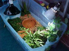 Basic info about Box Turtle care in captivity. Tortoise House, Tortoise Habitat, Tortoise Table, Baby Tortoise, Sulcata Tortoise, Tortoise Vivarium, Tortoise Food, Reptile Habitat, Turtle Care
