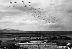 ***** Airborne Operation during Korean War.***** During Korea War, US 187th Airborne Regimental Combat Team had 2 paratrooper operation during Korean War.(Google & Young Ki Moon) 1) Sukchon &Sunchon operation.(Oct.20,1950) Photo 1--- 187-troops waiting at Kimpo airfield,Korea. Photo 2--- N.Koreans just watching numerous parachutes on air.