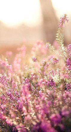 wildflower wallpaper - Google Search