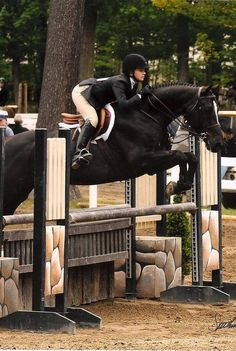 Show jumping with my thoroughbred/quarter horse!