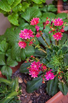 Plants, Garden, Succulents, Plant Design, Flowers