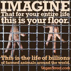 Spend your entire life in an overcrowded room full of acrid eye-choking air with only an uncomfortable wire floor to walk and sleep on, and you'll have an idea of what it feels like to be one of the animals that will die to end up on your dinner plate. Vegan Animals, Farm Animals, Reasons To Go Vegan, Factory Farming, Why Vegan, Stop Animal Cruelty, Animal Protection, Animal Welfare, Animal Rights