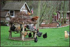 Chicken roost gazebo