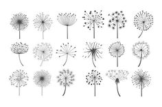 Dandelion collection in linear style. Photoshop Textures