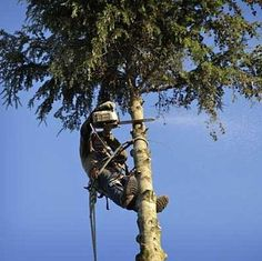 Honululu Tree Service are locally owned tree and lawn care company, dedicated to providing you with the best possible service. Our Fast, professional tree service experts will save you time and money. Our customer service and solutions can't be beat!Honululu Tree Service help your landscape flourish by addressing architectural tree care concerns such as safety, structural integrity, shape and appearance.
