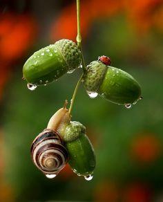 Il Prend des Photographies Incroyables des Plus Minuscules Créatures de la Nature
