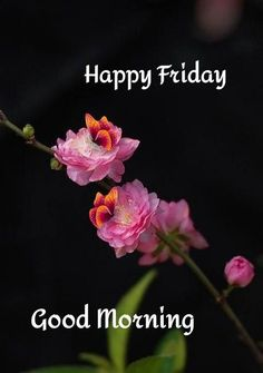 Morning Love, Good Morning Picture, Friday Morning, Morning Pictures, Good Morning Images, Blue Butterfly Wallpaper, Morning Quotes, Happy Friday, Night