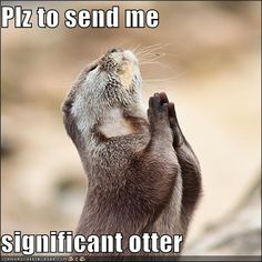 For my significant otter