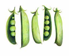 Sweet Peas // Food Illustration // Archival por KendyllHillegas, $20.00