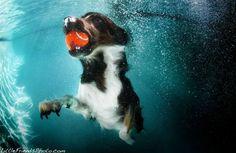 Striking Underwater Dogs By Seth Casteel