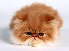 no. - http://cutecatshq.com/cats/no/