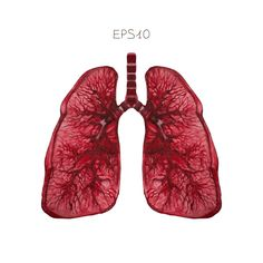 """<span class=""""entry-title"""">Researchers Discover KLF4 is a Crucial Factor in Pulmonary Hypertension</span><span class=""""entry-subtitle"""">These findings may accelerate the development of KLF4-targetting therapeutics in Pulmonary Hypertension </span>"""