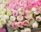 Paris Photography -  Pink and White Ranunculus at a Paris Market, French Home Decor, Large Wall Art, by georgiannalane on Etsy, $30.00 USD
