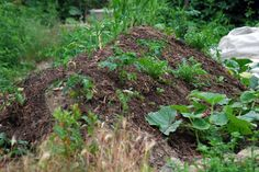 Hügelbeet im GleisBeet Plants, Lawn And Garden, Pictures, Plant, Planets