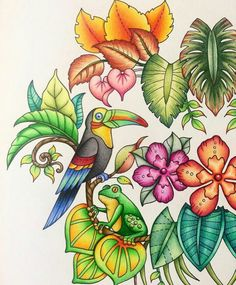 Magical Jungle - Johanna Basford - Inspiration