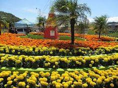Love flowers!!! Boquete. Panama.