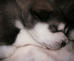 Wouldn't you love to sleep this peacefully?