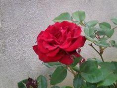 quelques fleurs de mon jardin • Hellocoton.fr
