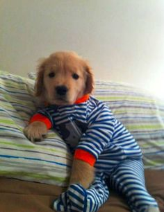 Little, stripy dog babies. | Which Animal Looks The Cutest In A Onesie?