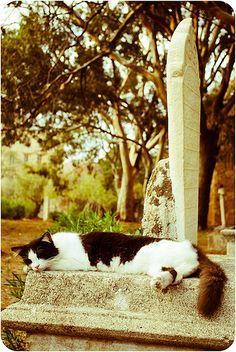 Cemetery Cat Nap. ( cat in morning :/ )