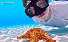 #ElCieloDelCaribe una zona impresionante repleta de estrellas marinas #Cozumel #MexicoHoteles http://ift.tt/1m3yoTN