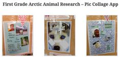 1st Grade Arctic Animal Research using Pic Collage: https://newsfrom2016finalists.wordpress.com/2015/03/22/theres-no-place-like-nome/