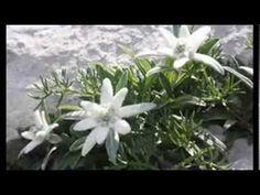 Improvviso di De Marzi Coro degli Alpini Orobica - YouTube