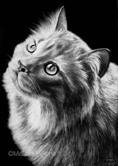 Lucy melissa helene scratchboard pet portrait www. Pencil Drawings Of Girls, Pencil Drawings Of Animals, Art Drawings, Black Paper Drawing, Colored Pencil Artwork, Scratchboard Art, Eyes Artwork, Scratch Art, Drawing Projects