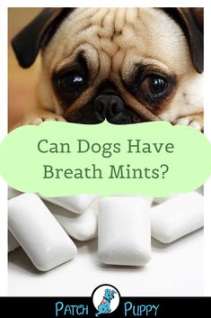 "Does your dog have bad breath? Can dogs have human breath mints?Can dogs eat altoids? Read out post "" Can Dogs Have Breath Mints?"" to learn How to freshen dog's breath naturally Diy Dog Treats, Dog Treat Recipes, Bad Dog Breath, Can Dogs Eat, Dog Eating, Dog Snacks, Breathe, Your Dog, Mint"