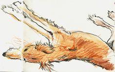 Lynne Chapman - dog   Flickr - Photo Sharing!