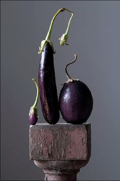 Food | Nourriture | 食べ物 | еда | Comida | Cibo | Art | Photography | Still Life | Colors | Textures | Design | Eggplant Family  © Lynn Karlin