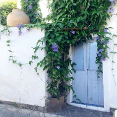 Blue door + ivy.