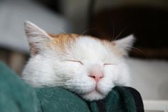 Love a sleeping cat...