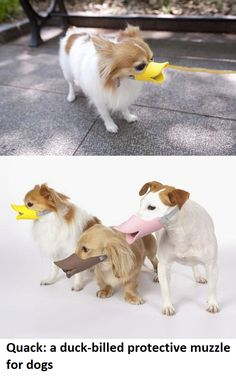 Quack A Duck-Billed Protective Muzzle For Dogs.
