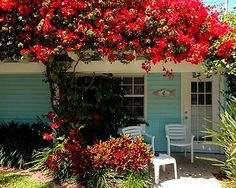 Tradewinds Resort - Anna Maria Island, Florida.  Amazing place to stay and vacation at.  Affordable and makes you feel like you are on a simple old timey vacation! Not to mention is absolutely charming with all of the little cottages and greenery!