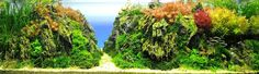 "243L (64 gallon) Aquatic Garden: ""Infinite Wonder""      Kam Wong, North Point Hong Kong"