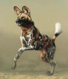 Weird Dog Names - Dog And Puppies Cartoon - Cutest Dog Names - Dog Walking Quotes - Dog Pictures Nature - Wildlife Paintings, Animal Paintings, Animal Drawings, African Hunting Dog, African Wild Dog, Nature Animals, Animals And Pets, Cute Animals, Beautiful Dogs