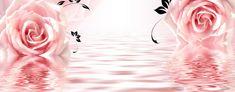 Rosas de color rosa de fondo