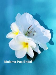 TROPICAL HAIR Clip, Ivory, White Plumeria, Hibiscus, Wedding Headpiece, Bridal, hair piece, Flower Clip, Hawaii, Hair Accessory, hair flower by MalamaPuaBridal on Etsy